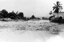 Boats washed ashore along the Wailoa River during the 1952 tsunami.